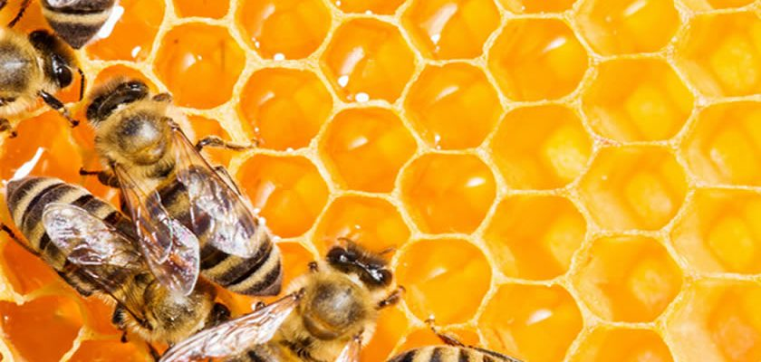 Eating The Honeycomb and Its Health Benefits